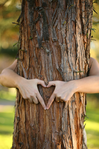 Image result for images of tree huggers